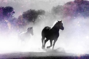 Wild Horses in Nature by dePace-