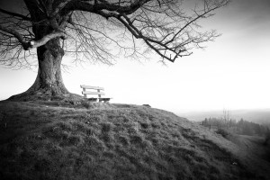 lonely bench under a tree by dePace-