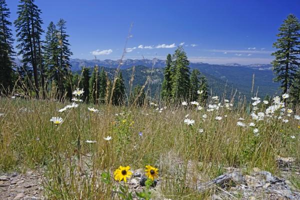 Sierra Nevada in Spring 5 of 8 Digital Download