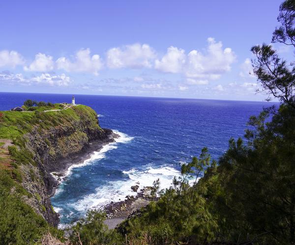 Spring at Kilauea Lighthouse on the Island of Kauai Digital Download