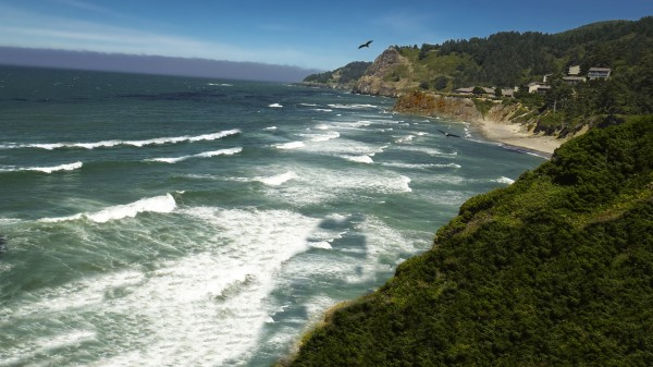 Eagles Flying Along the Coast Digital Download
