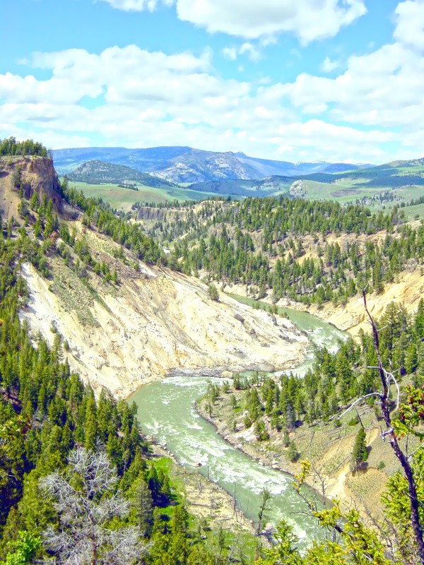 Wild Yellowstone Digital Download