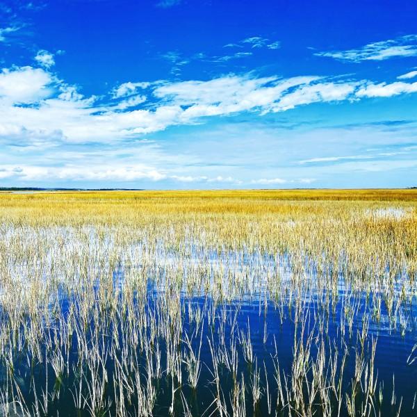High Marsh by Aaron Ramus