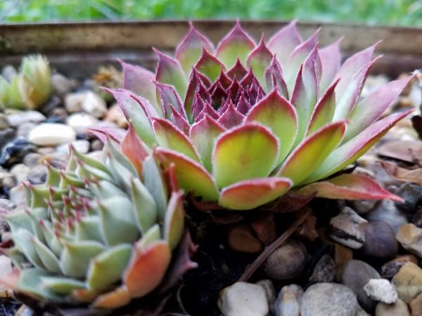 Succulent Scape by Amy Joy Elizabeth Pearl