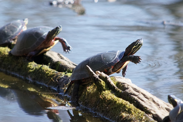 Turtle Dance by Andy LeBlanc
