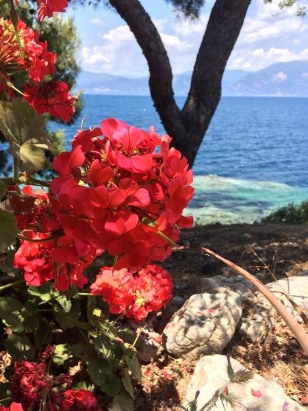 Oleander in Greece by Anita Varga