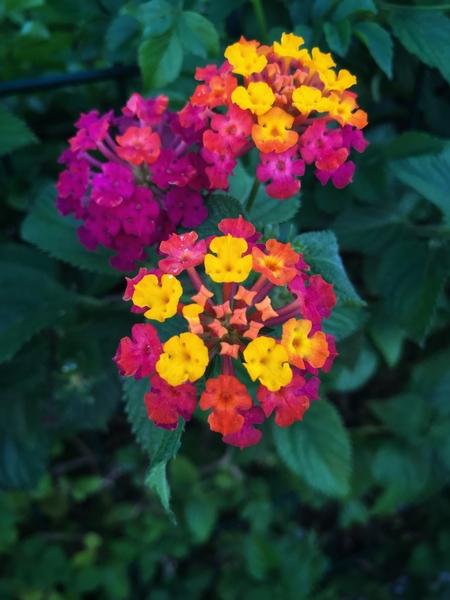 A beautiful flowers by Anita Varga