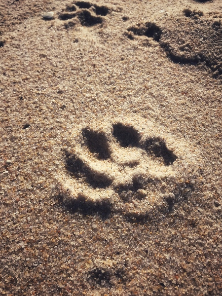 A paw in the sand by Anita Varga