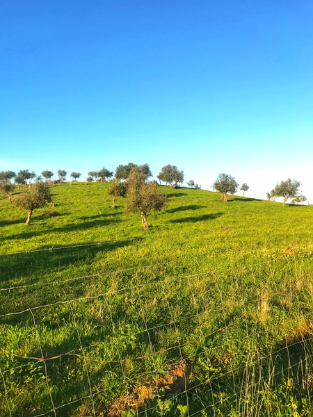 Landscape of central Portuga by Anita Varga