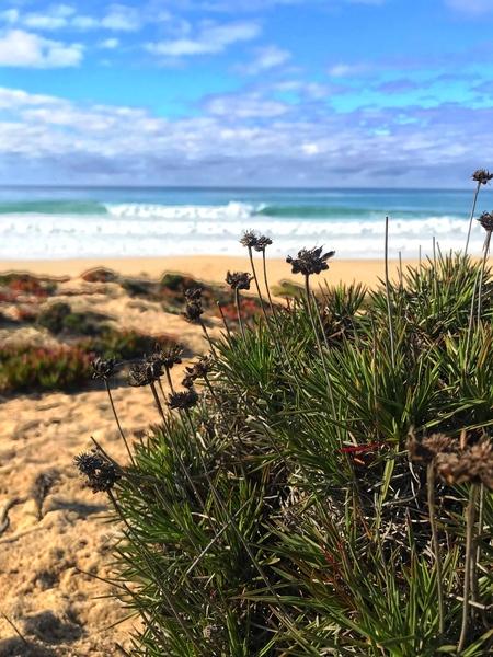 Portugal coast by Anita Varga