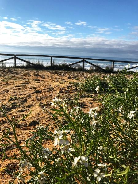 Flower on the beach in Portugal by Anita Varga