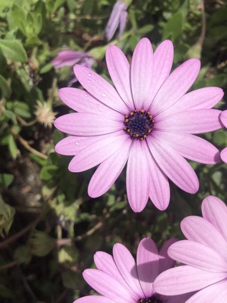 Pink flowers in Greece by Anita Varga