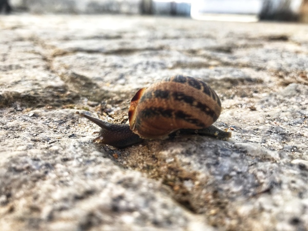 Little snail in the village of Portugal by Anita Varga