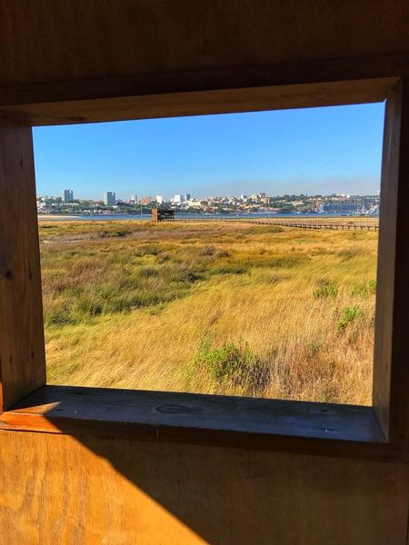 I birdwatcher near Porto Portugal  by Anita Varga
