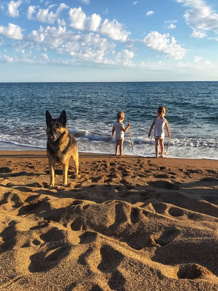 Kids and a dog in the sunset by Anita Varga