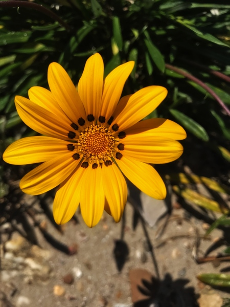 A jellow flower by Anita Varga