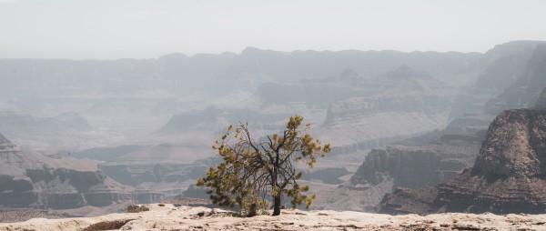 Desert Shrub Grand Canyon by Anthony M Farber