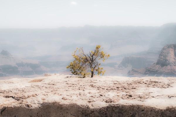 Desert Shrub Grand Canyon 2 by Anthony M Farber