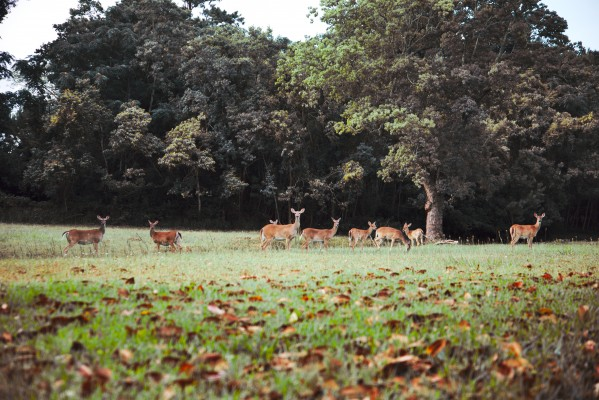 Deer in the woods by Anthony M Farber
