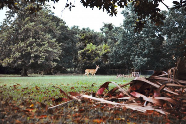 Deer at rest by Anthony M Farber