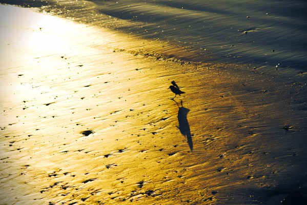 Birds at Sunrise by Anthony M Farber