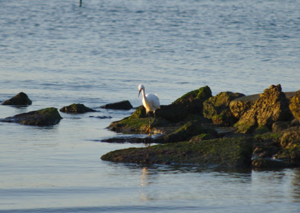 Bird at the Beach by Anthony M Farber