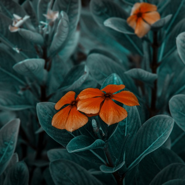 orange flowers by Arash Azarm