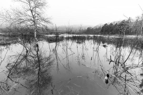 Beaver Pond ap 2357 B&W by Artistic Photography