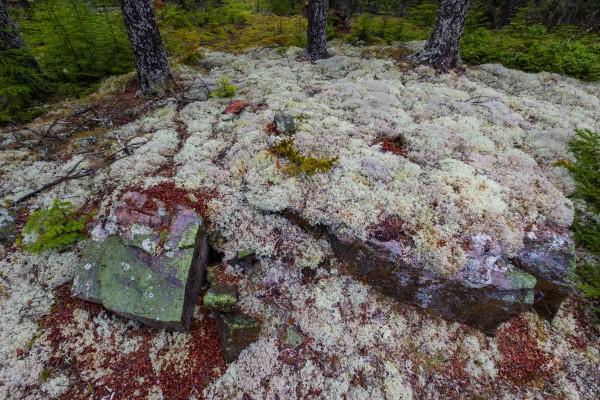 Purple Rocks ap 2278 by Artistic Photography