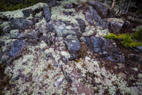Purple Rocks ap 2289 by Artistic Photography