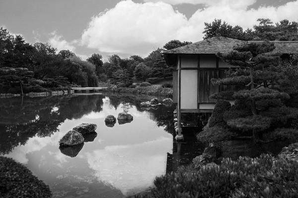 Black White Pond by Ashley ML Studios