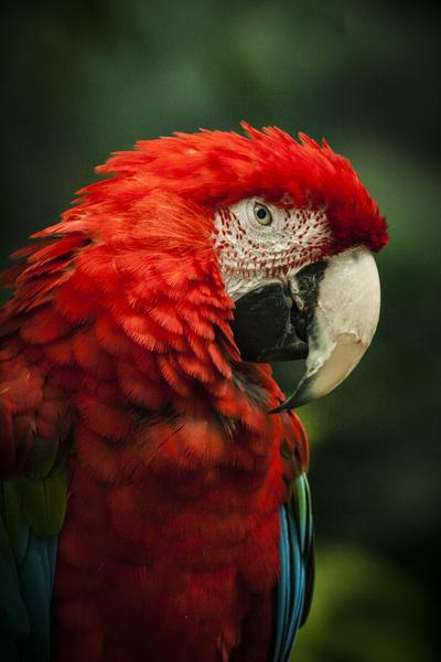 Parrot Portrait by Ashley ML Studios