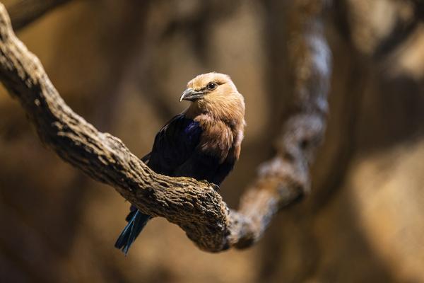 Perfect Pose  Bird  by Ashley ML Studios