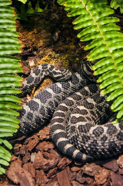 Soaking up Shade   Rattle Snake  by Ashley ML Studios