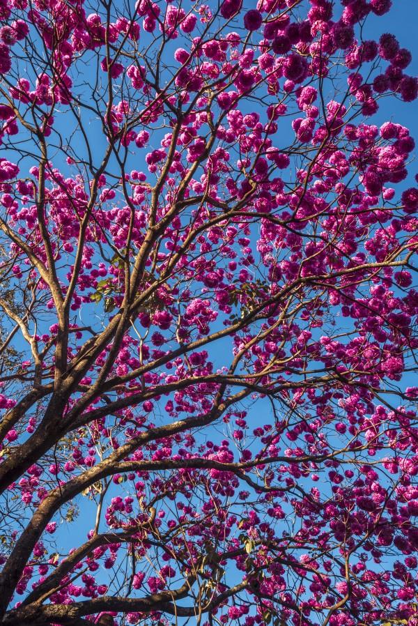 Joy of Life - 04 by Augusto Miranda