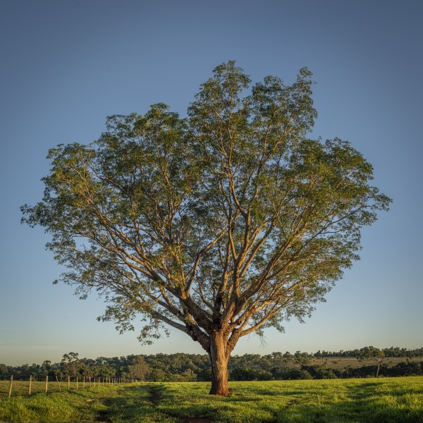 Blessing Tree by Augusto Miranda