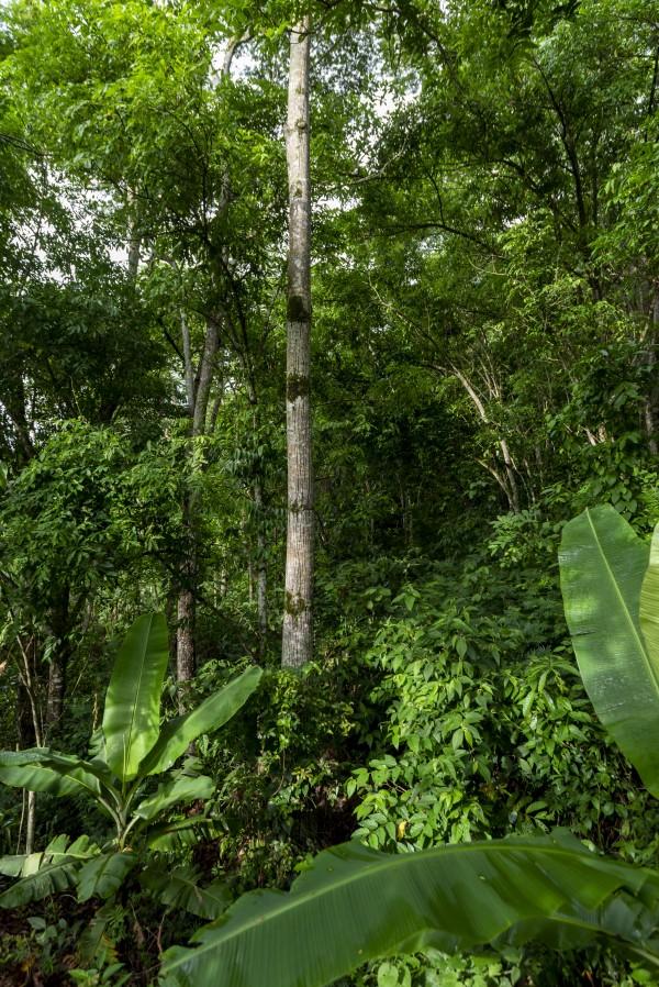 Green woods 01 by Augusto Miranda