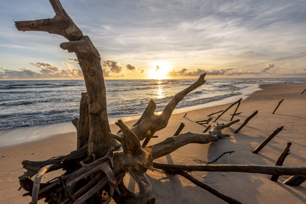 Dead tree by the sea and sunrise by Augusto Miranda