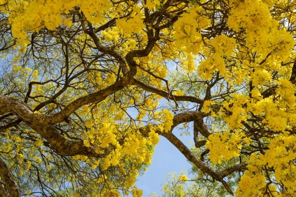 Golden Bloom - 02 by Augusto Miranda