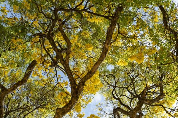 Golden Bloom - 03 by Augusto Miranda