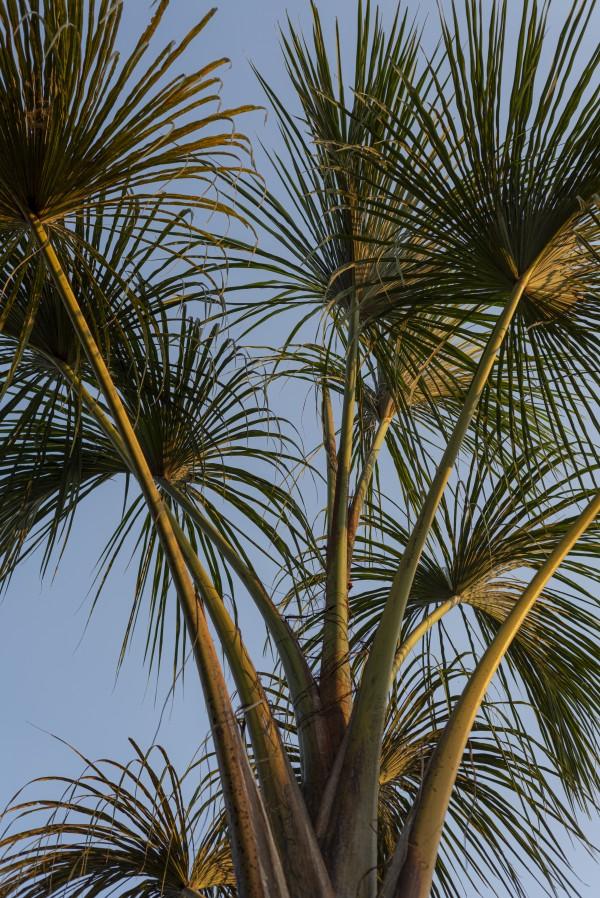 Buriti Palms 02 by Augusto Miranda