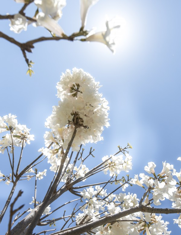 Bright white - glow by Augusto Miranda