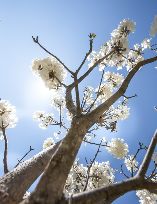 Bright white - Up by Augusto Miranda