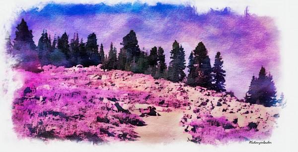 Lavender Field by Aurelia Schanzenbacher Sisters Fine Arts