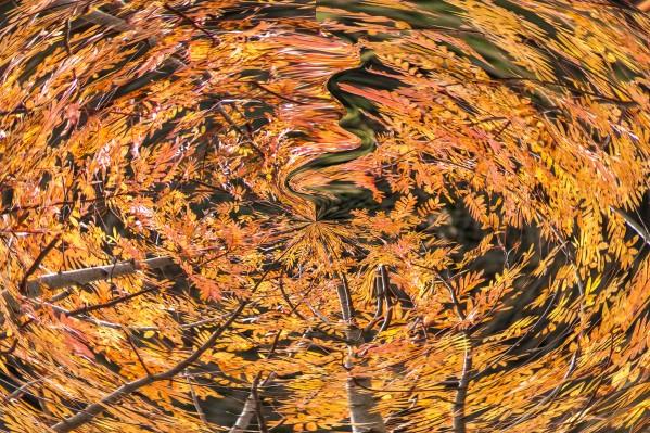 fall vortex  by BBS Art