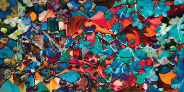 multiform colored abstract shapes by BBS Art