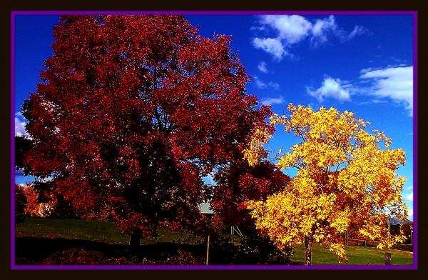 Two Trees by Bearze