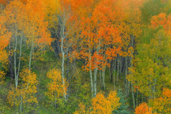 ABOUNDING COLOR  by Bill Sherrell