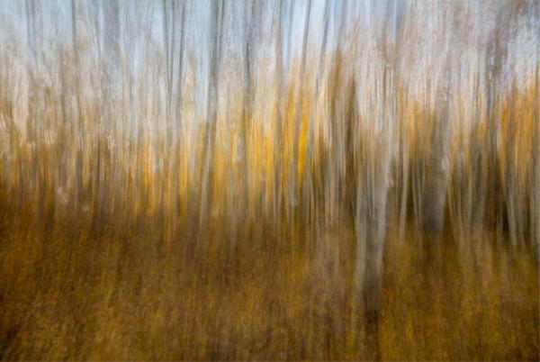 AUTUMN FOREST DREAM by Bill Sherrell