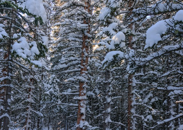 SNOWBOUND by Bill Sherrell